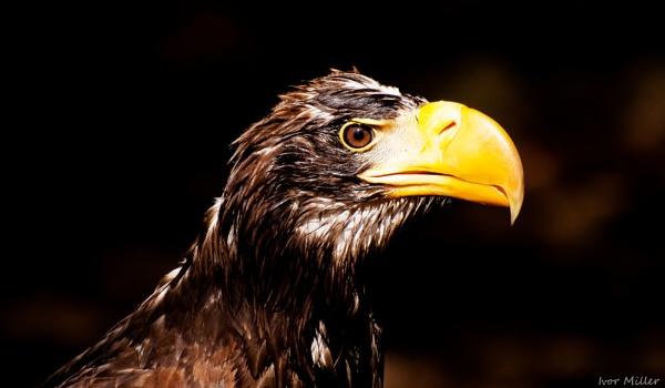 big beak by tattsdurham