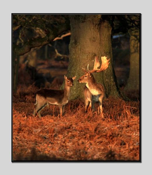 Yes, my deer. by 7d