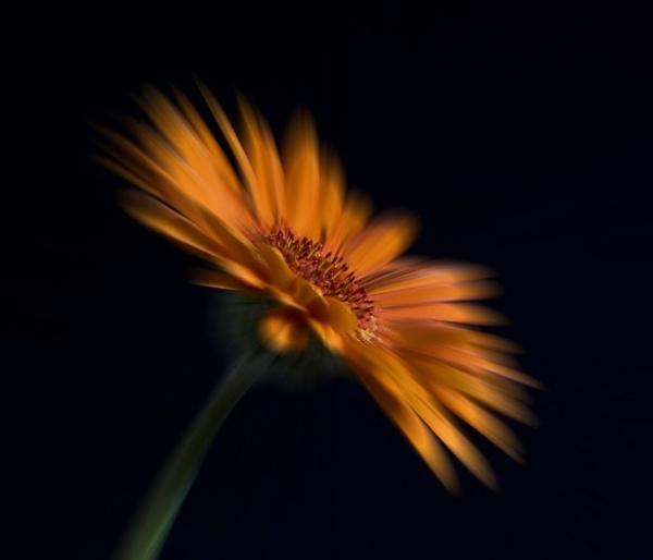 Bloom Burst by beckybookins