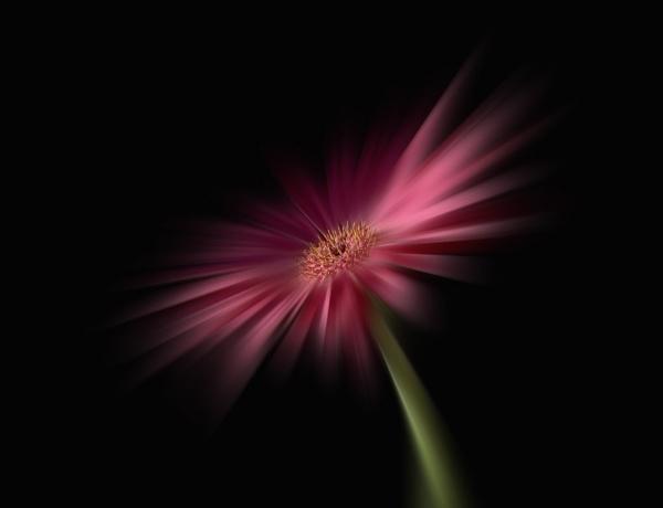 Splash of pink by beckybookins