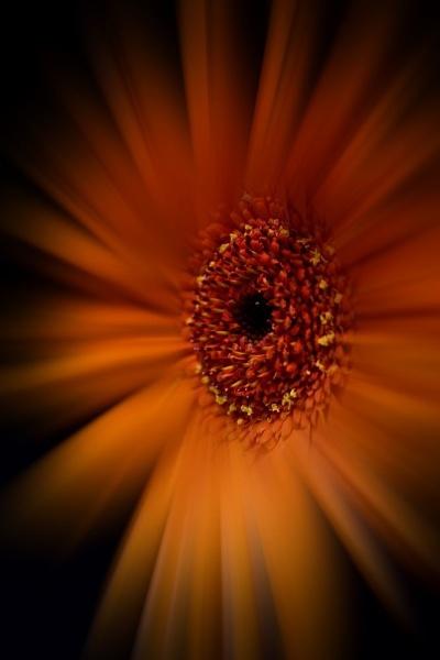 Sunshine by beckybookins