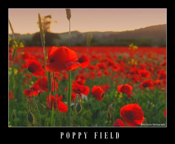 Poppy Field by Alandyv8