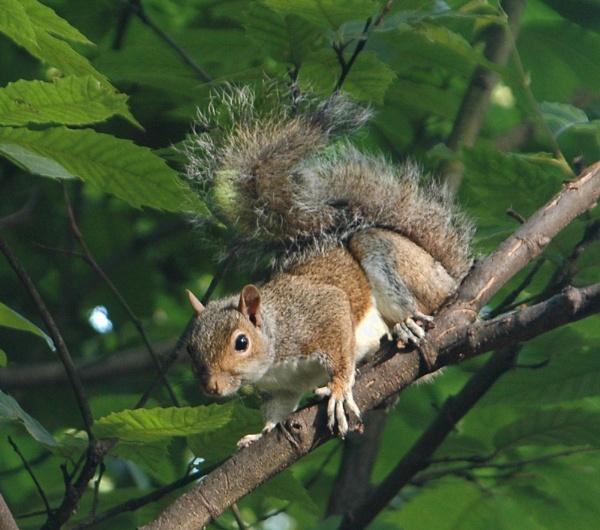 Squirrel by heron