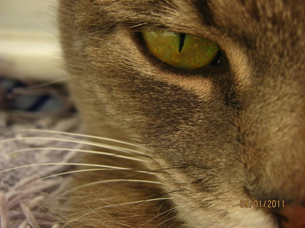 Willow\'s eye by SuperMacroGirl