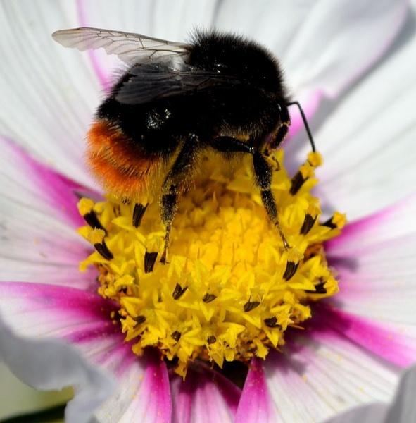 Pollen by cheekyamyleigh