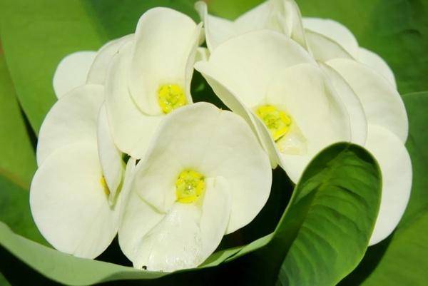 White Vs. Green. by faizul_md