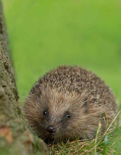 Prickles by Philip_P