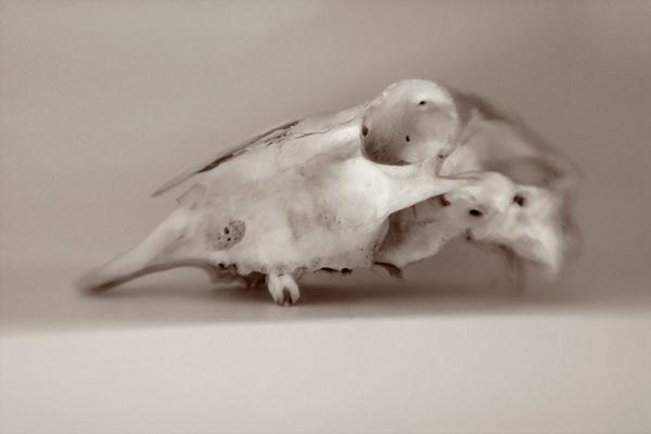 skull by TamJ