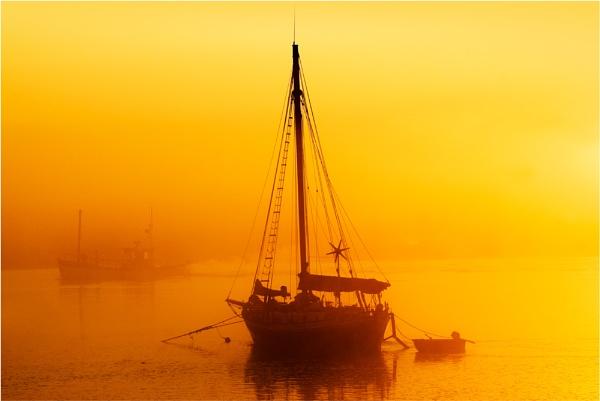 golden dawn by NEWMANP