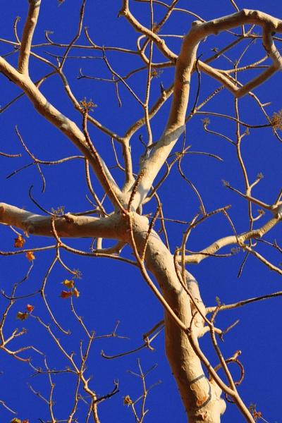 The Ghost Tree by konu