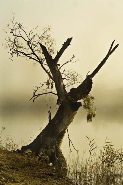 The Old Tree by Joeblowfromoz