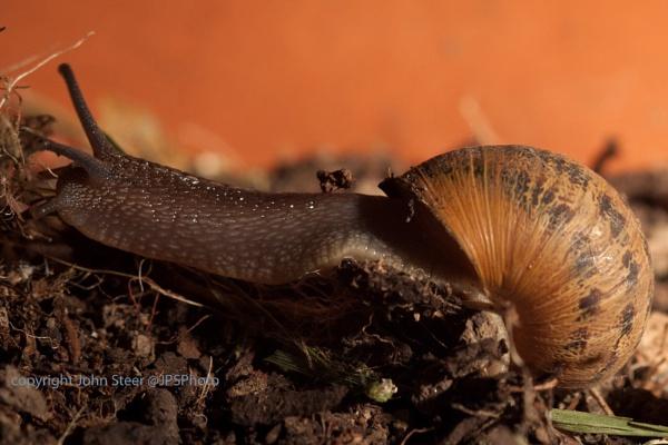 Snail by SkySkape