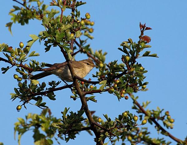 Bird in a tree!! by kevtrucker