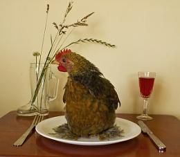 Chicken Dinner!!