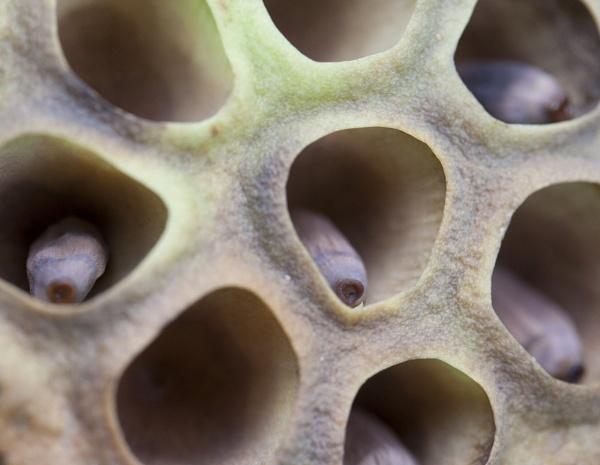 Inside a Lily Pod by lj090876