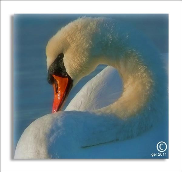 swan by yaco