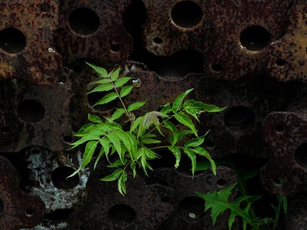 Drain Plant by schulmanjb