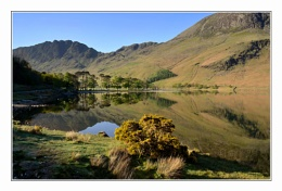 Buttermere Gold
