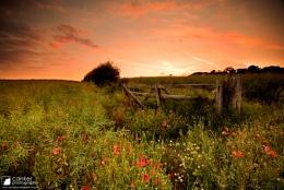 Summer pastures