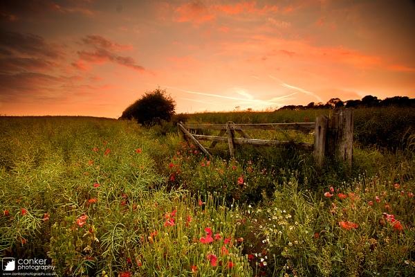 Summer pastures by mpnuttall