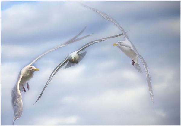 Seagull Dance by Daisymaye