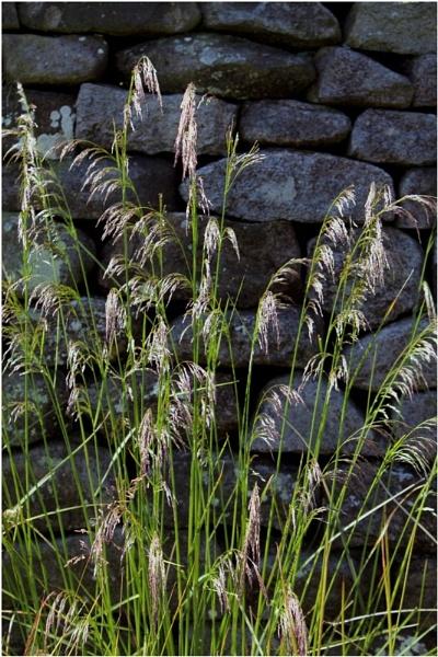 Grass by Natzdad