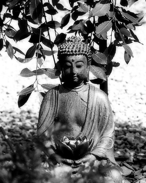 Buddha by joelgalleries