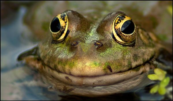 Big Eyes by ChasD