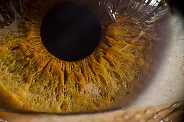 Eye Magnif. by gnovey