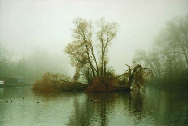 misty by floxyz