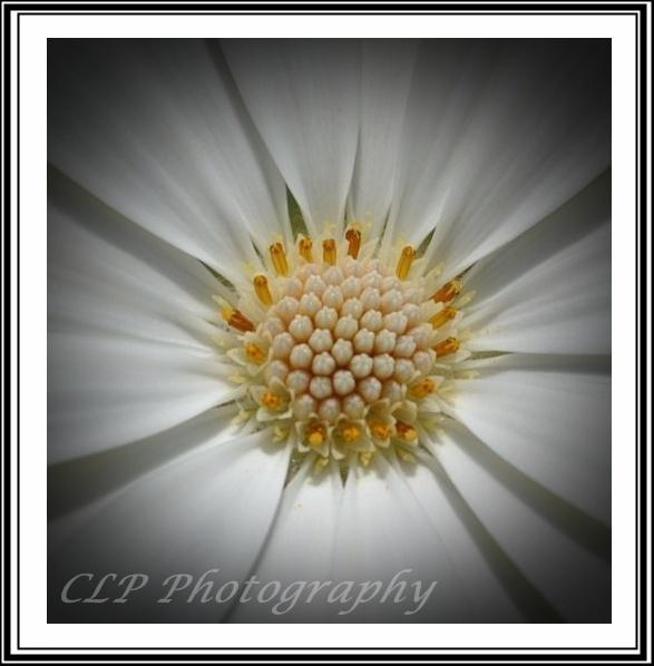 White flower by catherinekp79