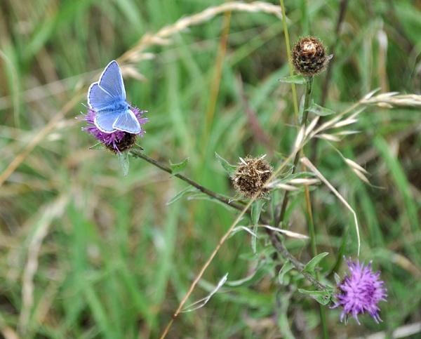 Blue Butterfly by rolandb1952