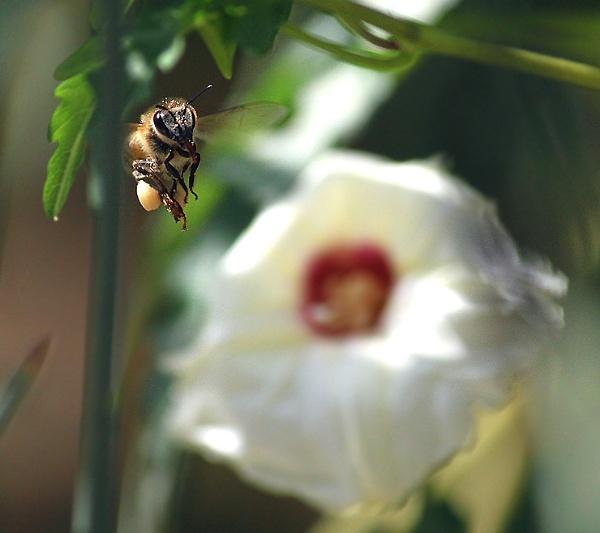 Bee 2 by HamedKhazaei