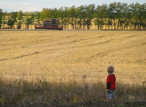 farmer in the making by inntrykk