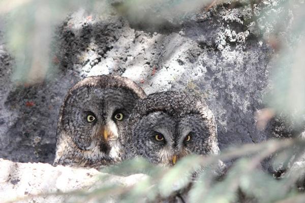 owl nest by inntrykk