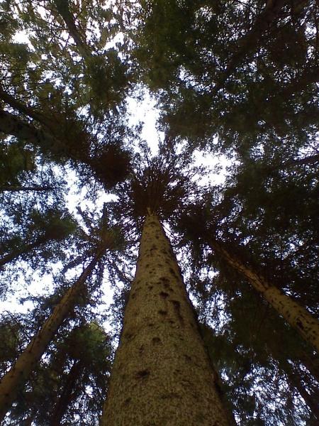 Tree tower by Kittenfox