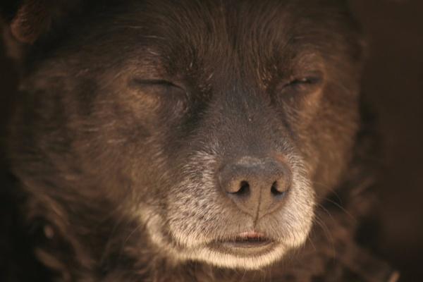 SLEEPING DOG by NATARAJAN