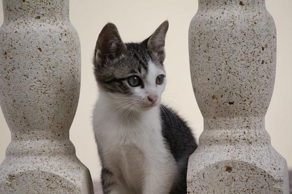 Cat by jojojellybean