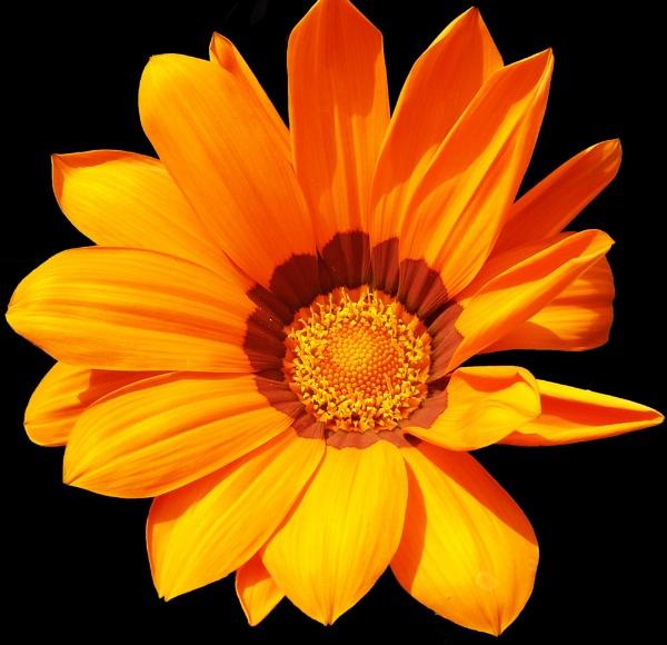 Orange Flower by sazzykins