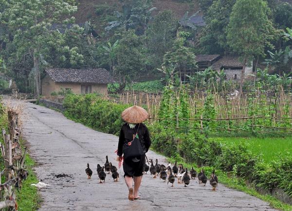NEAR YEN MINH (2) by JN_CHATELAIN_PHOTOGRAPHY