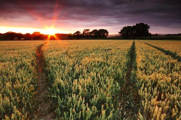 Sunset field by RoyChilds