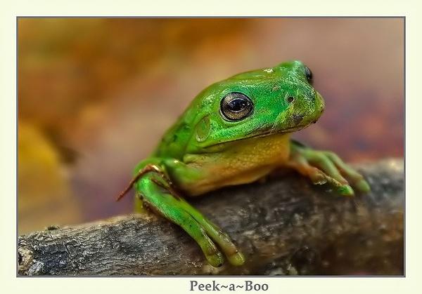 Peek~A~Boo by Joeblowfromoz
