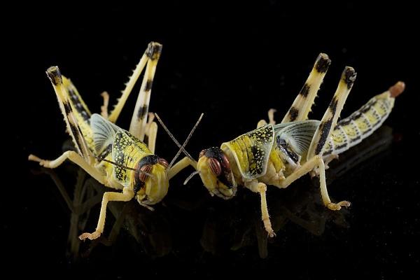 Locust discussions