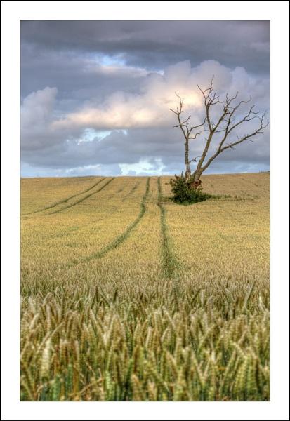 Dead Tree, Minetts Lane, Rogiet by terry-