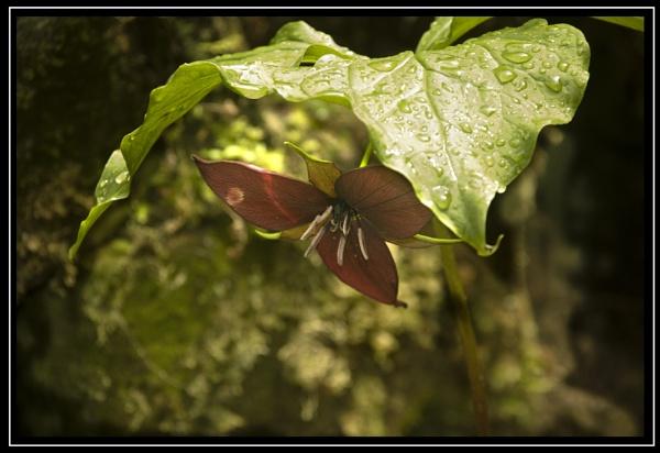 Umbrella plant! by jasonrwl