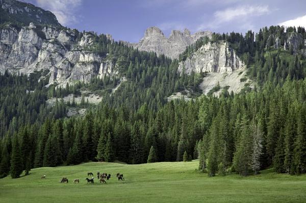 Wild Horses, Sesto Dolomites, Italy by caulfid2