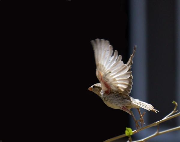take off by HamedKhazaei