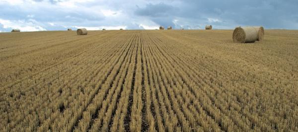 Summer hay by RichardMc