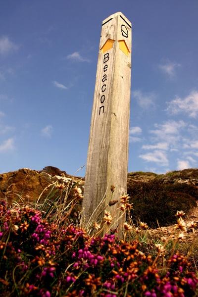 "\""Signpost\"" by neilrich"