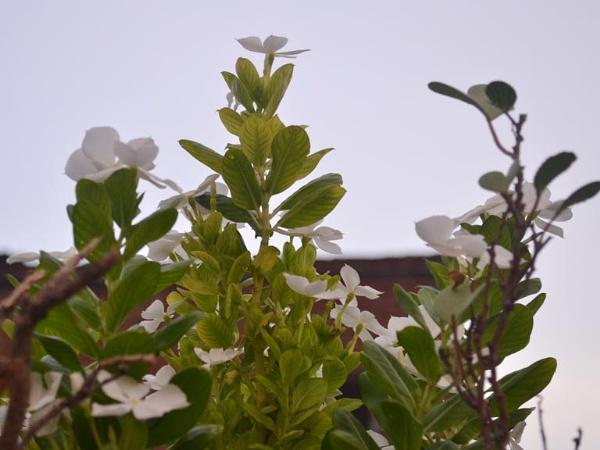 After Sun set Flower pot by Prashant1610